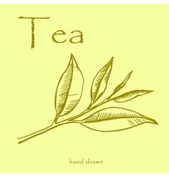 Green tea plant leaves Hand drawn herbal in sketch vector image