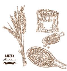 Cereals set hand drawn sketch wheat barley vector