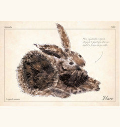 hare rabbit isolated hare rabbit vector image