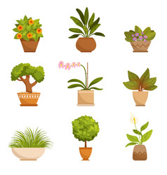 house plants decorative flowers indoors vector image