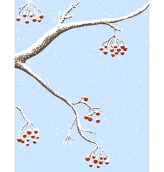 Rowanberries under snow vector