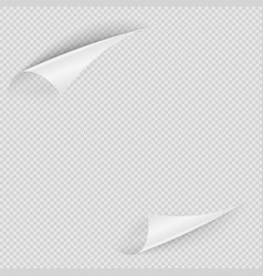 transparent paper template with two curly edge vector image