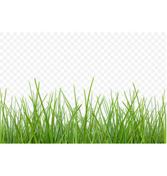 grass pattern for design vector image