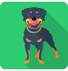 dog Rottweiler icon flat design vector image vector image