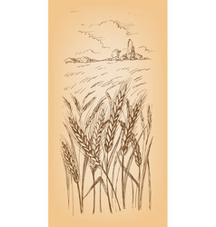 field of wheat barley or rye vector image
