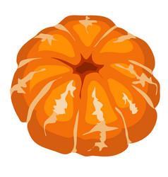 cartoon peeled mandarin isolated on a white vector image