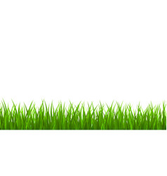 fresh green grass border vector image
