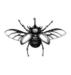 Hand sketched five-horned rhinoceros beetle vector