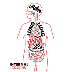 Internal organs typographic artwork internal vector