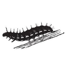 Butterfly larva vintage vector