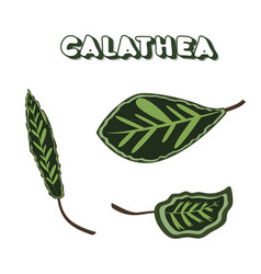 Calathea leaves with text vector