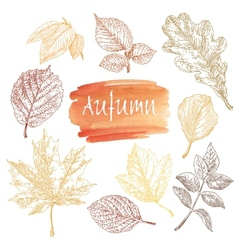 Collection of highly detailed hand drawn leaves vector image