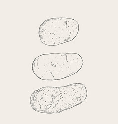 Set of pototoes hand drawn sketch vector