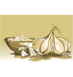 Garlic vector image vector image