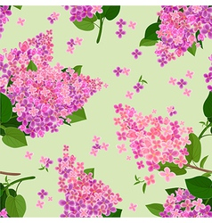 seamless texture with flowers of lilac vector image vector image