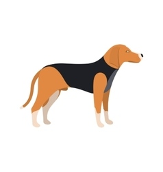 Beagle Dog - color serious dog Beagle breed vector image