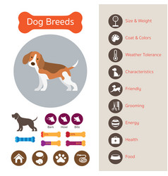 Dog breeds infographic vector