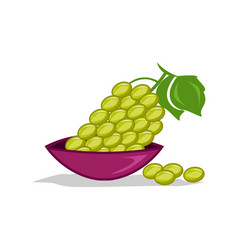 Green grapes icon vector