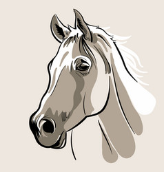 horse head hand drawn vector image