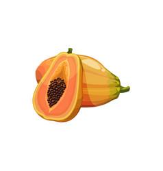 Papaya fruit with juicy yellow pulp plant vector