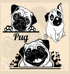 pug - set for t-shirt logo and template vector image
