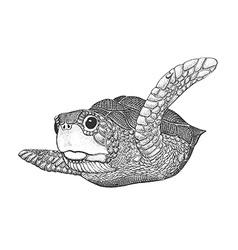Sea Turtle Engraving vector image