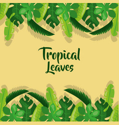 tropical leaves palm tree plant exotic frame vector image