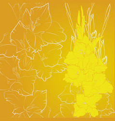 yellow flowers gladiolus vector image