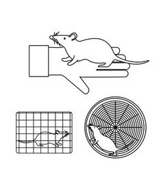 mouse in lab experiments vector image