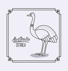 australia ostrich in frame and monochrome vector image