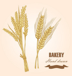 cereals set hand drawn wheat and barley vector image