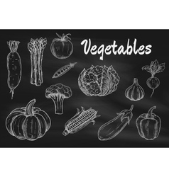 chalk sketched vegetables on blackboard vector image