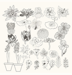 Design element flowers and leaves line art vector