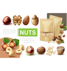 realistic healthy nuts composition vector image