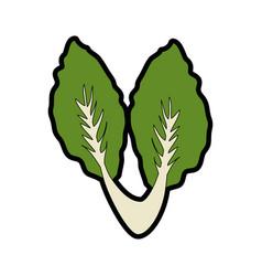 salad vegetable food vector image