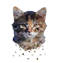 triangle cat color abstract vector image