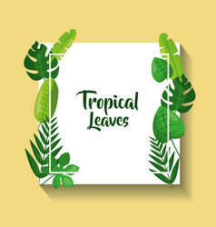 tropical leaves card flora natural decoration vector image