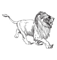 Walking lion is a statue of lion in it natural vector