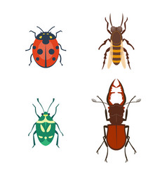 Colorful insects icons isolated wildlife wing vector