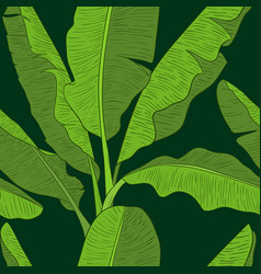 banana leaves pattern vector image