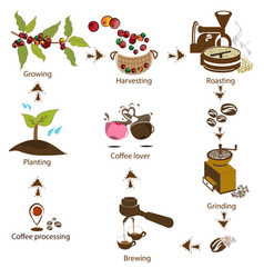 Coffee processing step by step vector