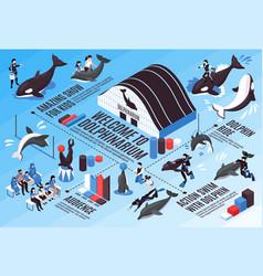 Dolphinarium isometric infographic scheme vector