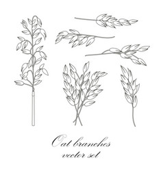oat branches set vector image