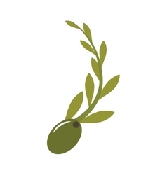 olive seeds icon vector image