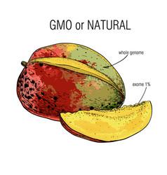 Sketch mango sample genome vector