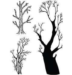 trees without leaves vector image