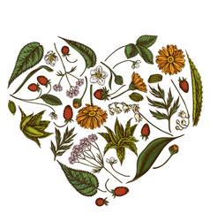 Heart floral design with colored aloe calendula vector