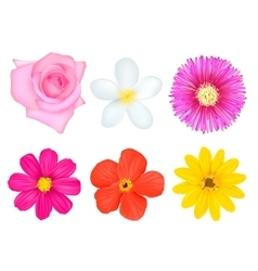 Isolated Colorful Flowers Set vector image