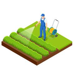 Isometric farmer watering a vegetable garden vector