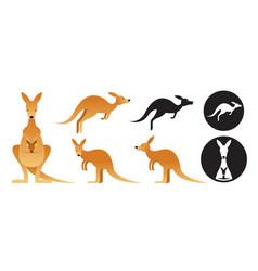 kangaroo set vector image